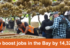 Kiwifruit to boost jobs in the Bay by 14,329 by 2030