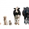 What is the Animal Health Industry?