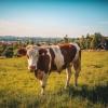 Feeling Bullish In Animal Health