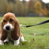 More Than a Leash or a Lead Rope: The Human-Animal Bond