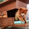 Find Your Home In The Animal Health Industry