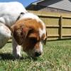 Sniffing Around the Animal Health Jobs Market