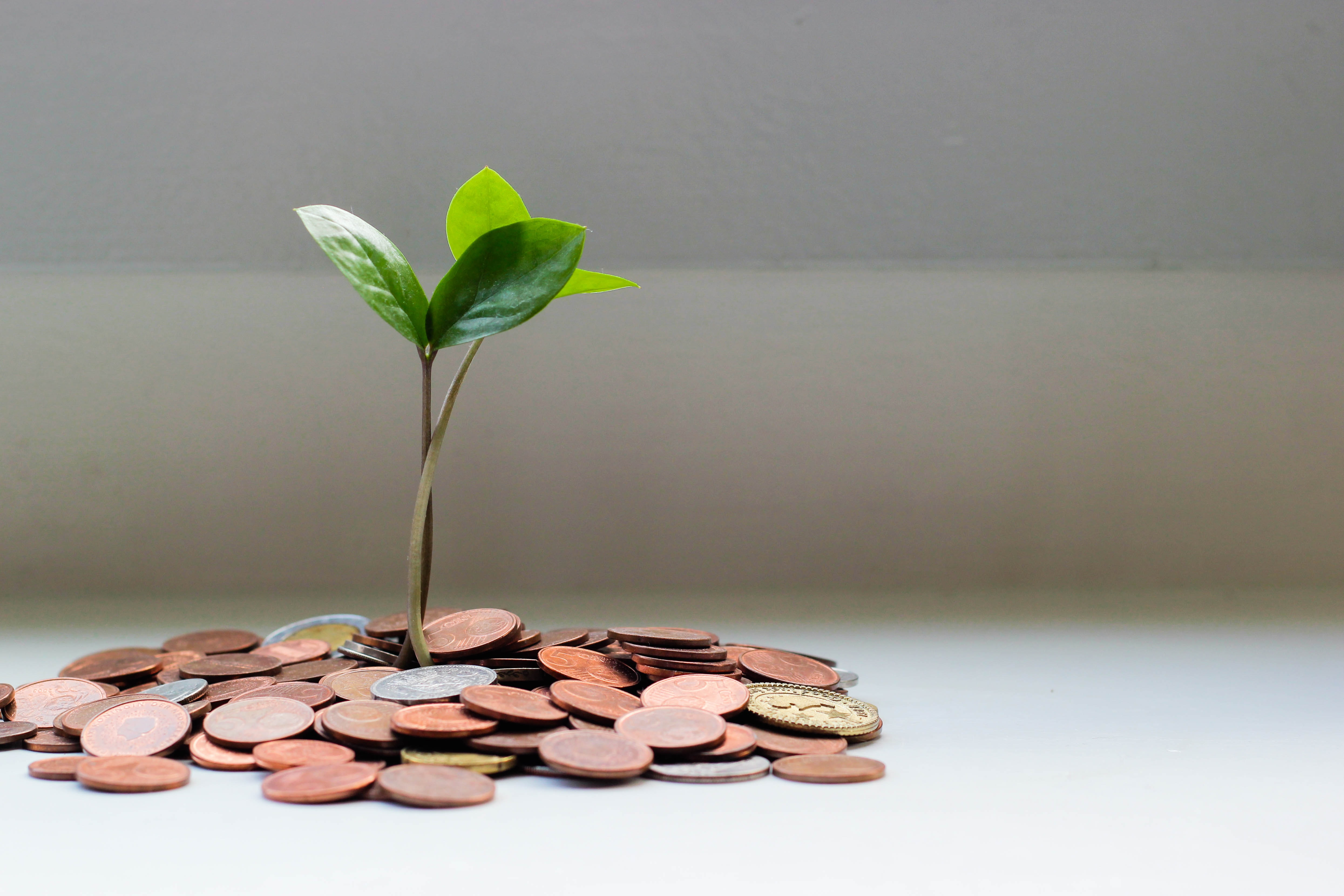 plant and money signifying how doctors help life and get paid to do so