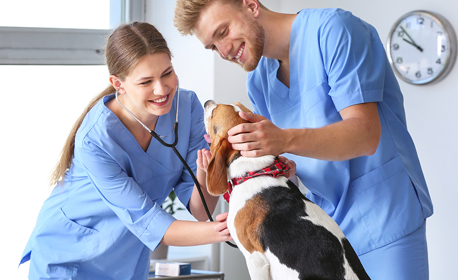 veterinary-assistants-working-on-a-beagle